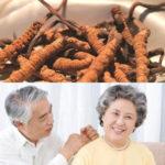 Tác dụng của đông trùng hạ thảo đối với người già