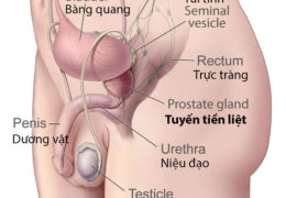 Những bệnh lý liên quan tuyến tiền liệt