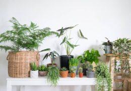 Những kiến thức trồng cây cảnh cơ bản cho người mới bắt đầu