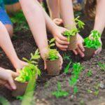 Kiến thức trồng rau mầm căn bản