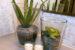 Hướng dẫn chi tiết cách trồng cây nha đam tại nhà
